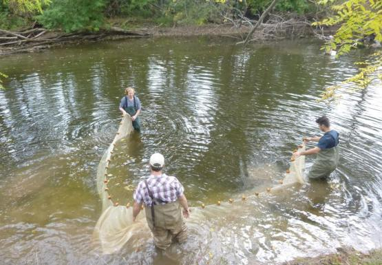 Three people wade in a creek and maneuver a long net between them.