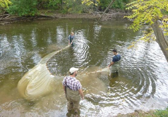 Three people wade in a creek and maneuver a long net between them. The net is flared out behind them as they start to pull.