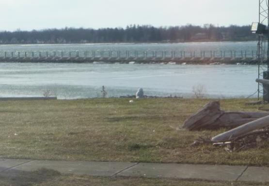 A view of the field station yard looking towards the water. A white bird is sitting on the ground near the shore.