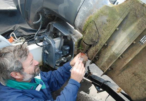 A person scrapes mussels on an outboard engine into a bag.