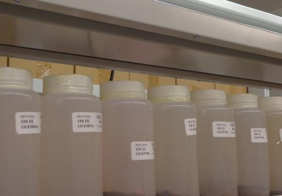 Labeled jars sitting on a shelf in a lab. There is a plant on the shelf also.