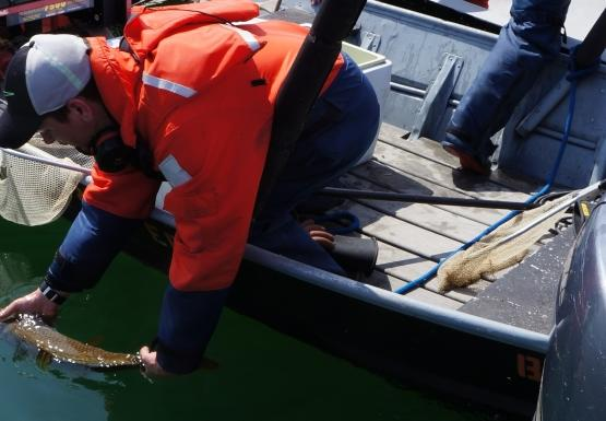 Two boats side by side. A person in the closest boat leans over the side to release a fish into the water