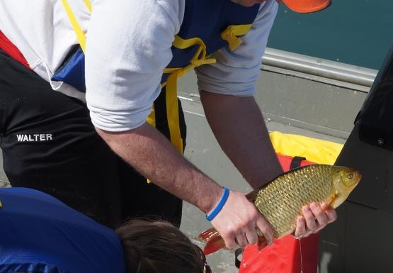 Two people stand on a boat over a cooler full of water and fish. One holds up a fish that is yellowish brown with orange fins