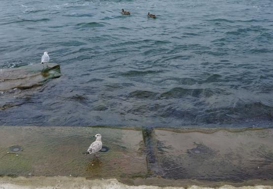 Gulls and ducks sitting on cement blocks by the water's edge