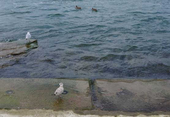 Birds on Bird Island Pier