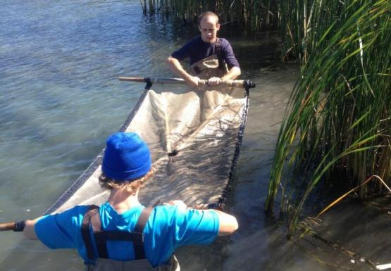 Two people wading in the water, holding a net between them above the water. There are large reeds behind them.