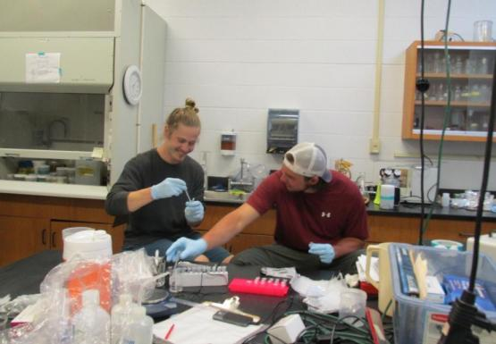 Two people sitting at a table in a lab. They are filling small capsule tubes with samples for genetic testing.