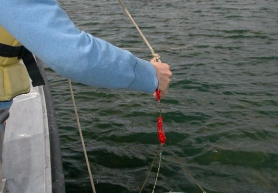 a student at the edge of the boat pulls up sampling equipment