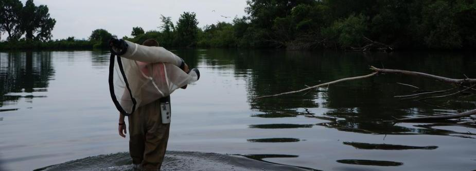 Carrying a seine net through shallow water