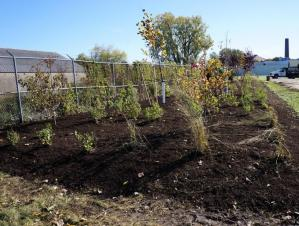 A large garden bed with medium sized plants and small bushes as well as trees planted along a chain-link fence.