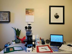 A microscope set up on a table with a laptop, some microscope slides, and papers. On the wall behind the table are some pictures, and there's a plant on the table.