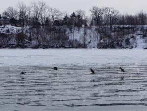 four ducks flying over water and ice