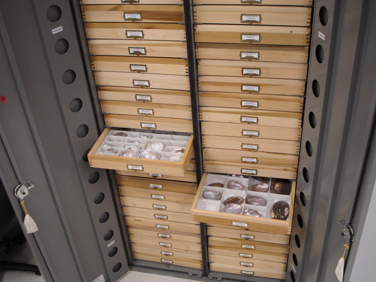 drawers of the mollusc collection