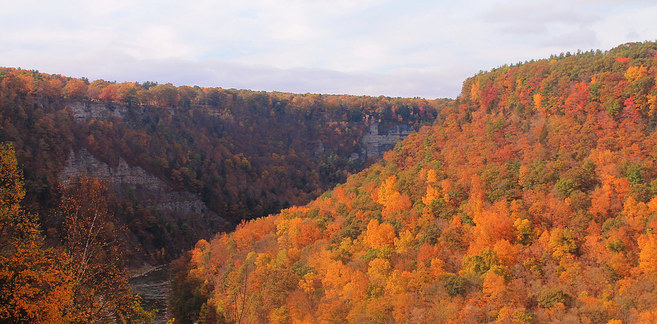 gorge full of trees with yellow and orange foliage