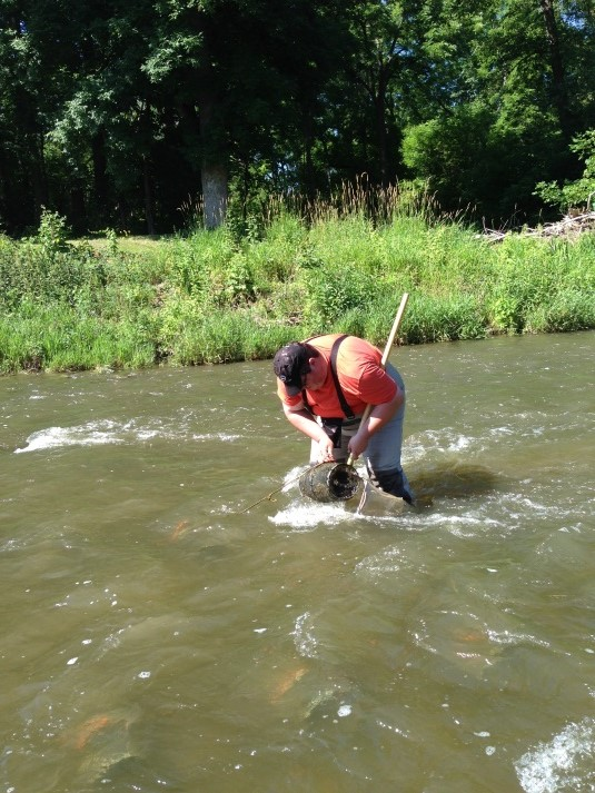 Steve Tentiger wading in Ellicott Creek to check traps